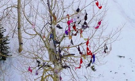 Better than a bra tree!